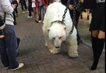 白熊1.png